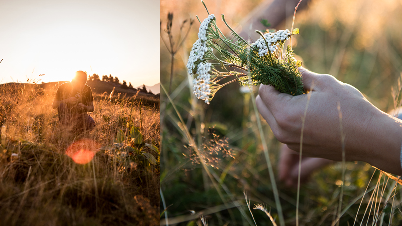 rammassage herbes sauvages chartreuse, gerard Borrel